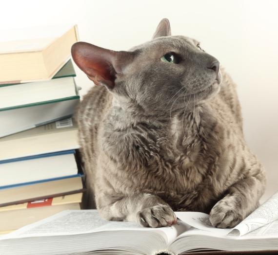 Knygos iš antrų rankų. Kur įsigyti ir kur dėti nereikalingas perskaitytas knygas?